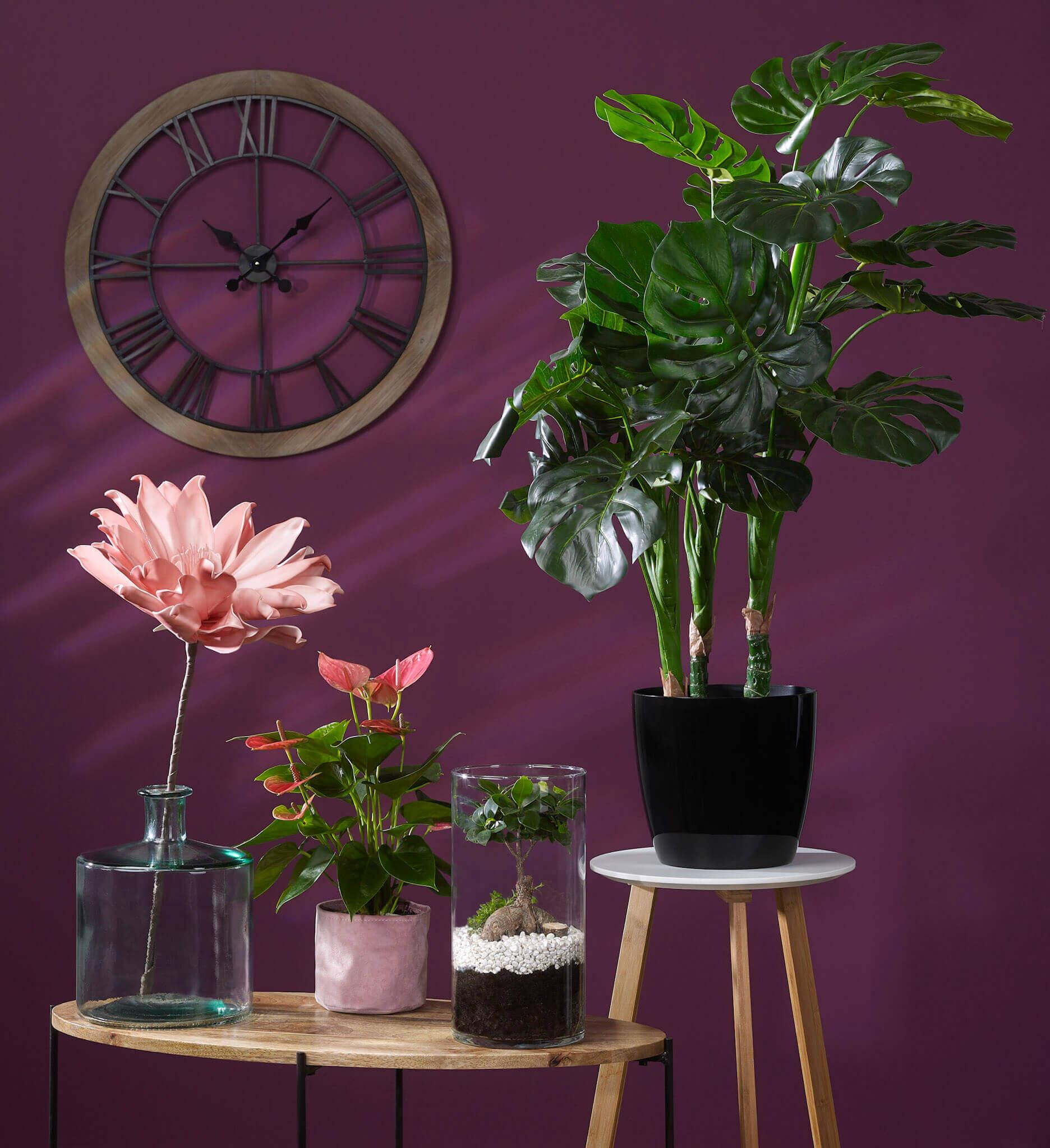 Les réalisations Lehmann Studio, photographe à Angers - shooting produits en studio packshot plantes Magasin Vert